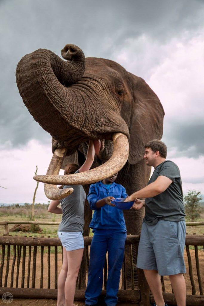 day safari tour