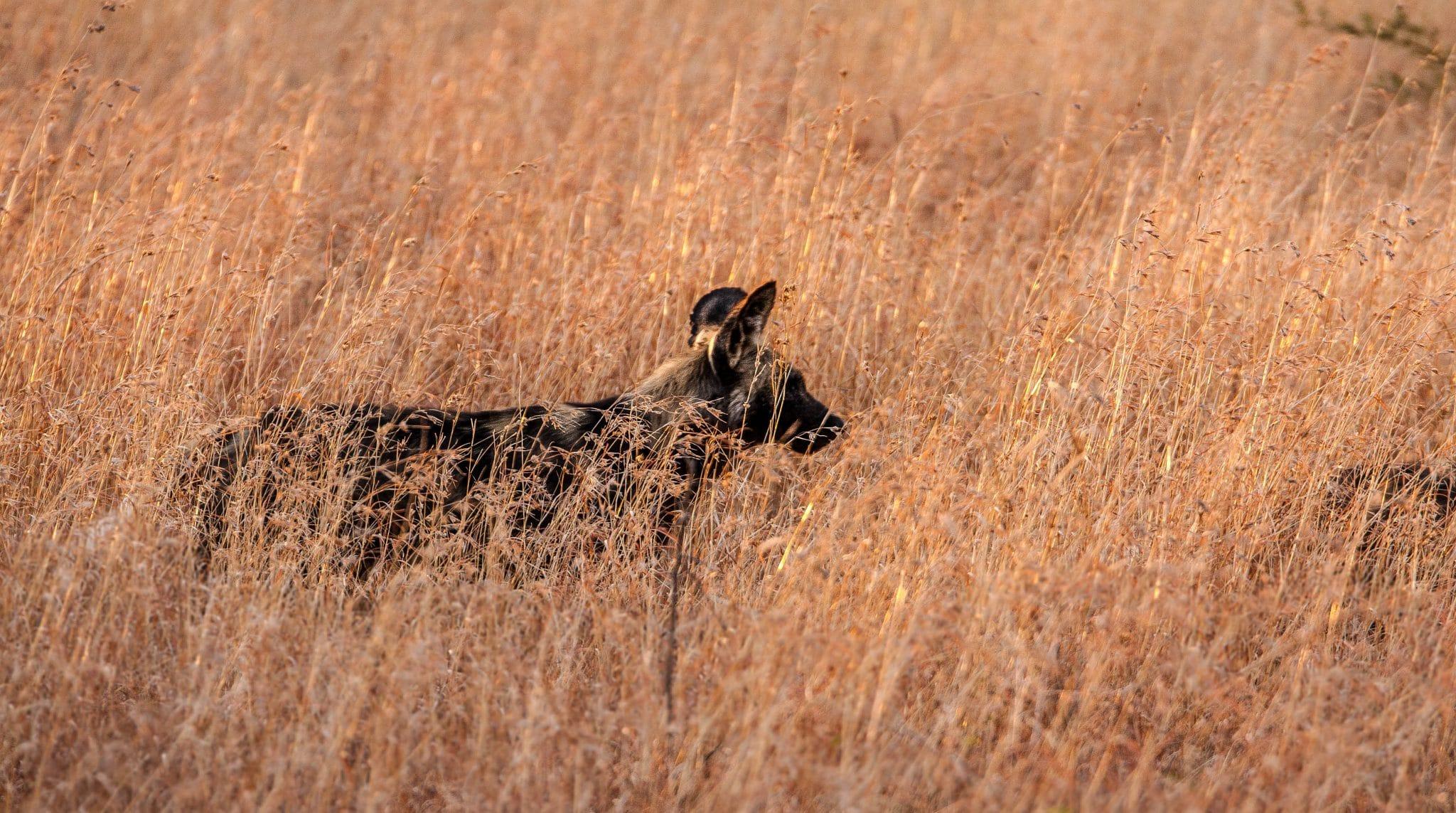 safari parks south africa