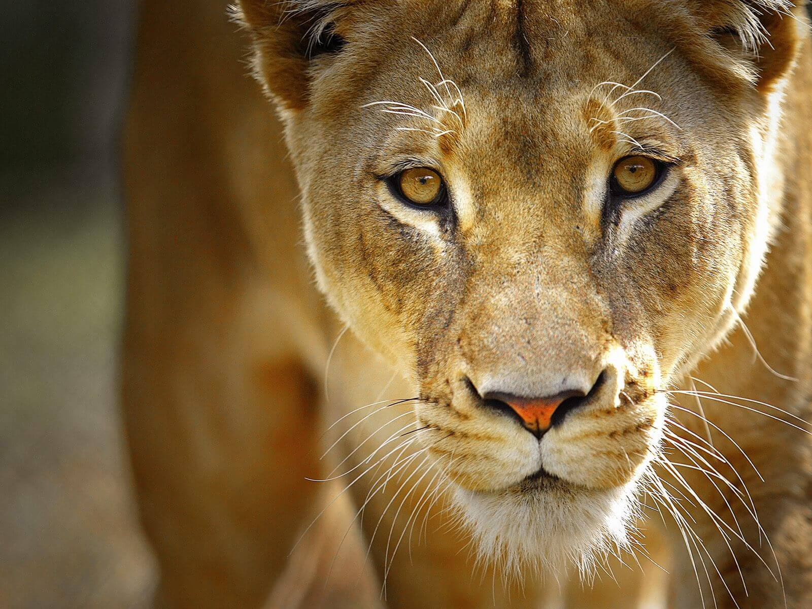 day safari