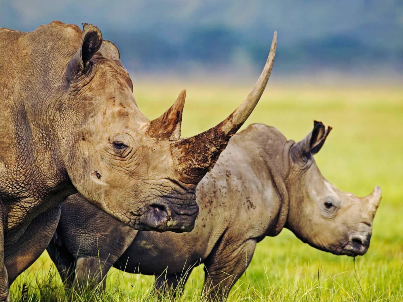 3 Day Hluhluwe Safari