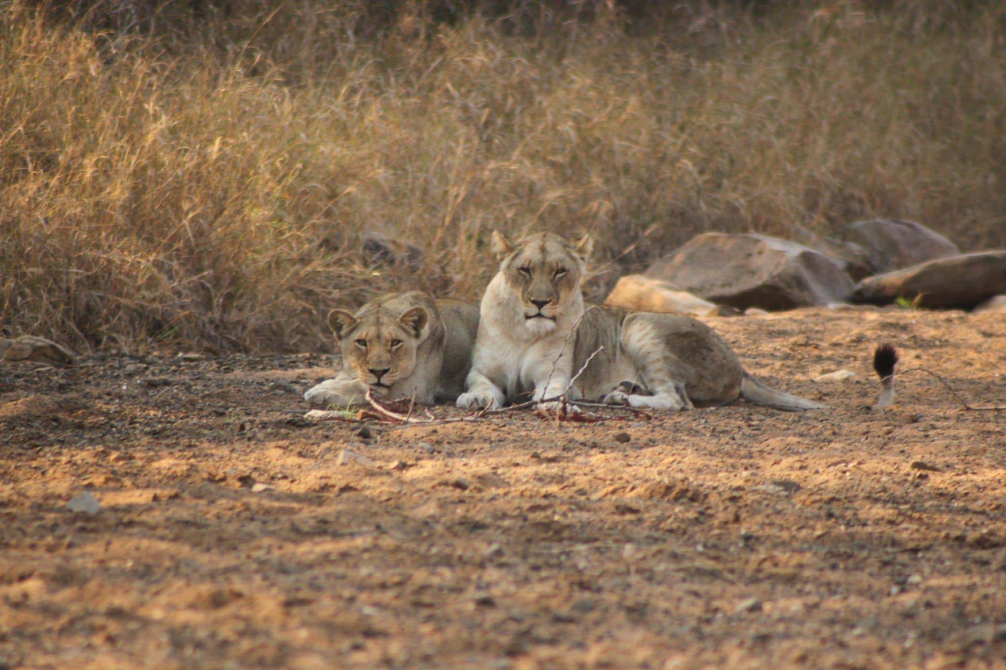 hluhluwe safaris