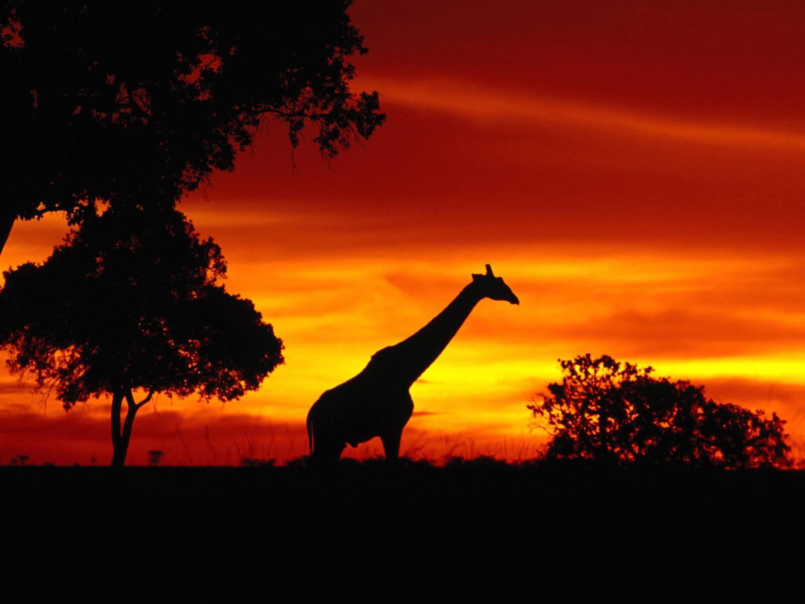 1 Night Safari Package