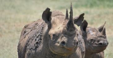 Rhino Poaching Hluhluwe Game Reserve