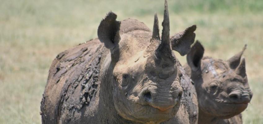 black rhino games