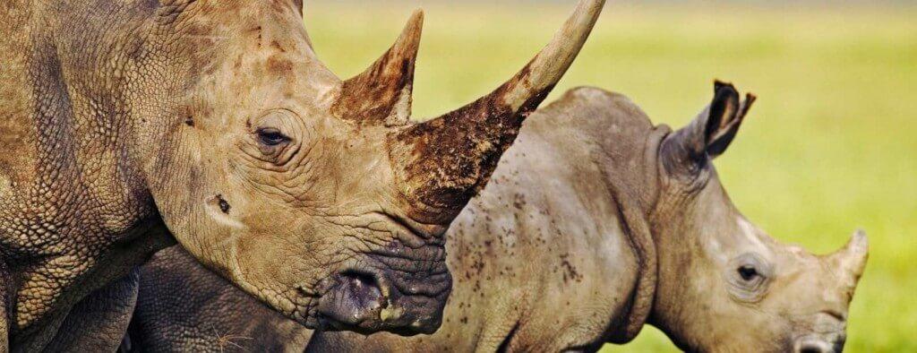 Rhino's & Bush 2 Night Safari Package