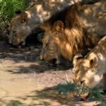 hluhluwe umfolozi half day safari