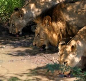 Durban Day Safari Tours