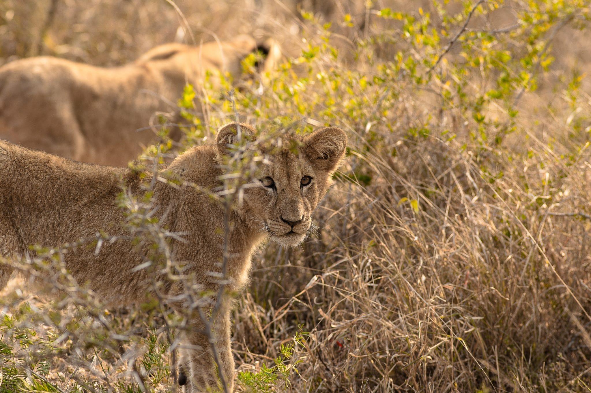 durban safari