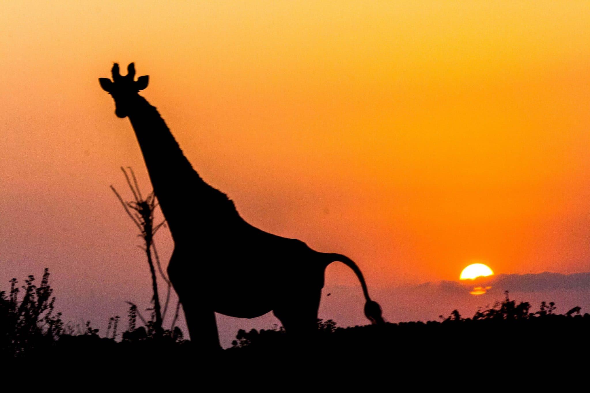 safari options isimangaliso