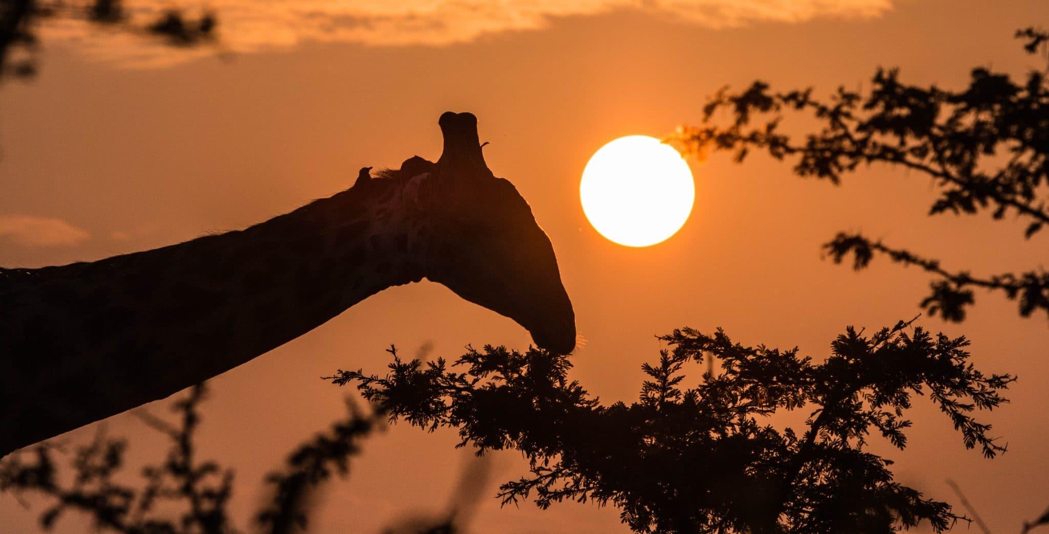 hluhluwe-imfolozi full day safari