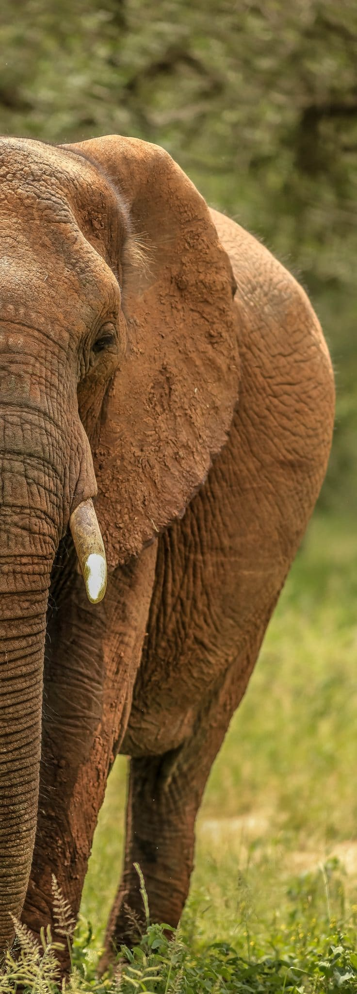 heritage tours and safaris st lucia kwazulu natal
