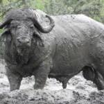 Umfolozi Game Reserve