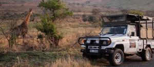 hluhlluwe umfolozi half day safari