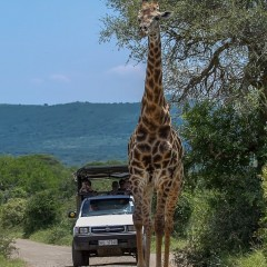 More amazing Sightings while on Safari