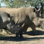 hluhlluwe umfolozi game reserve
