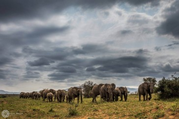 How to Book a Safari