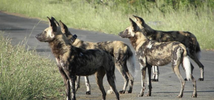 Hluhluwe Umfolozi Sightings 2012