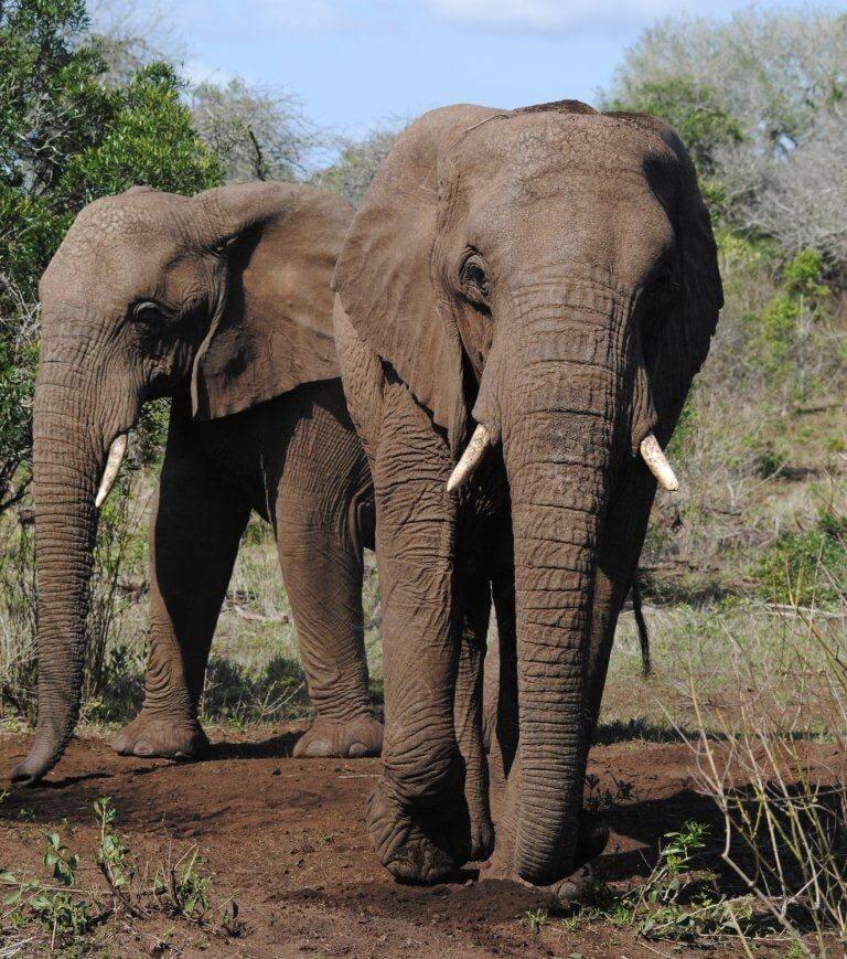 Hluhluwe Game Reserve Safari Prices Gate Times