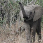 hluhluwe umfolozi safari updates