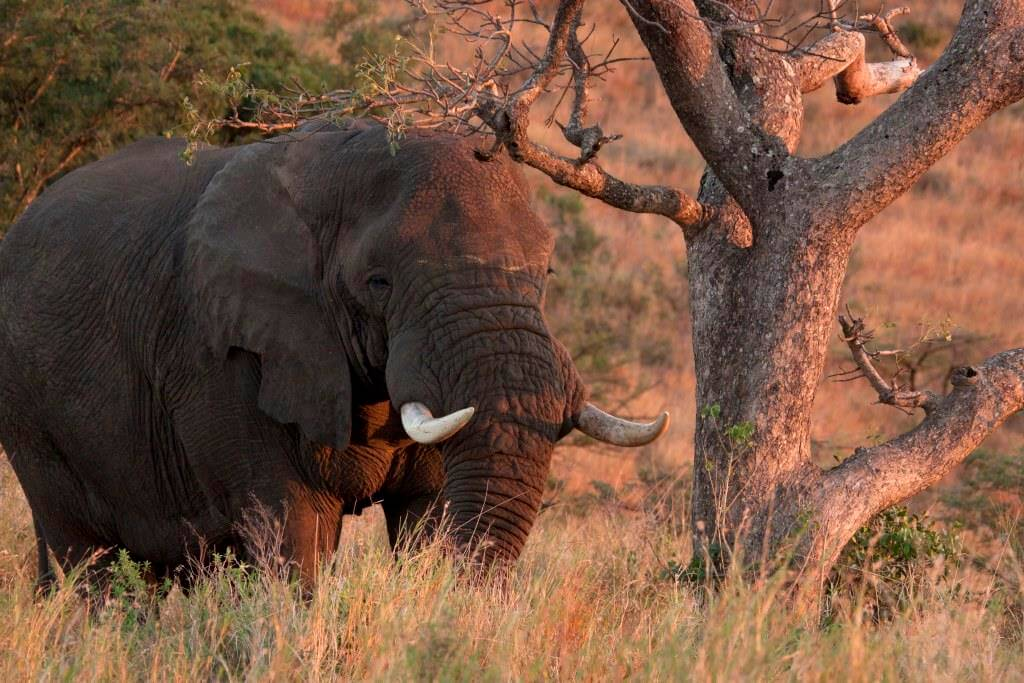day safari options to hluhluwe game reserve