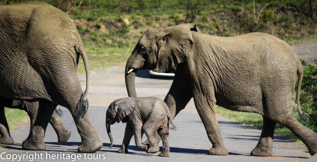 on safari umfolozi park
