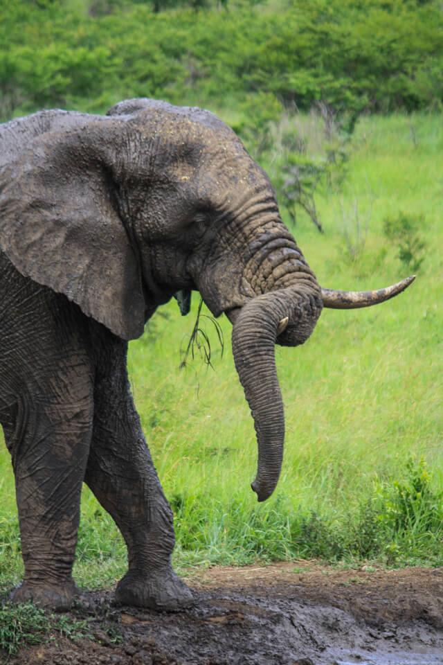 wildlife self drive safari tips