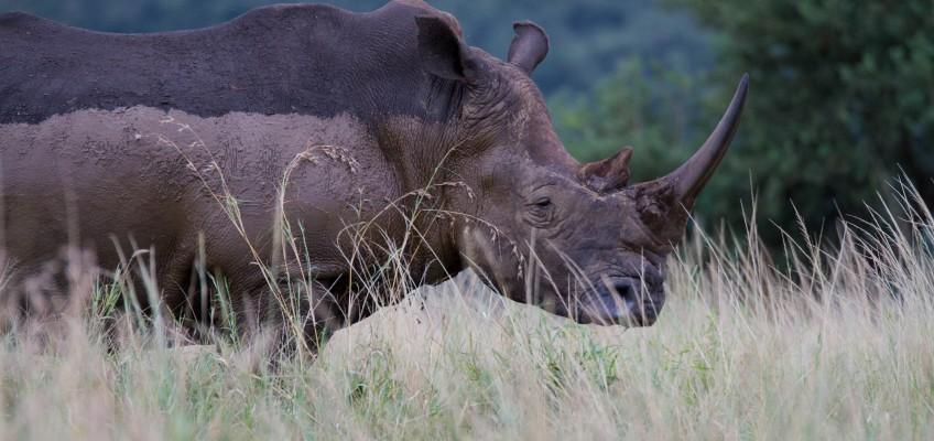 Durban Tours and Safaris