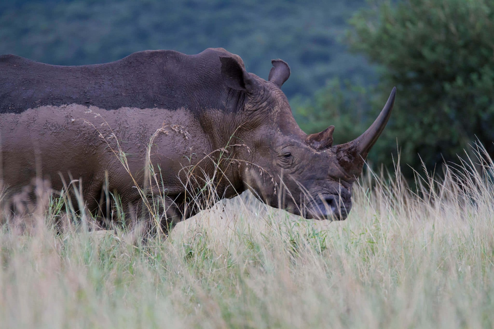durban safaris