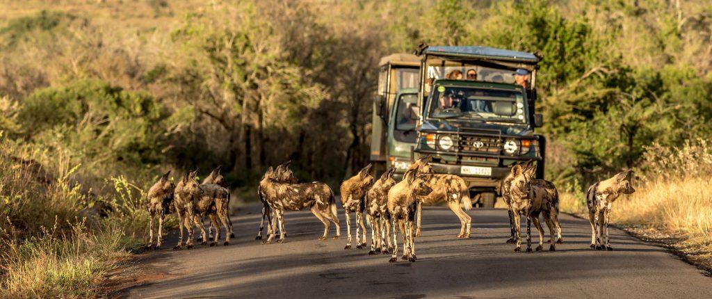 hluhluwe imfolozi park south africa