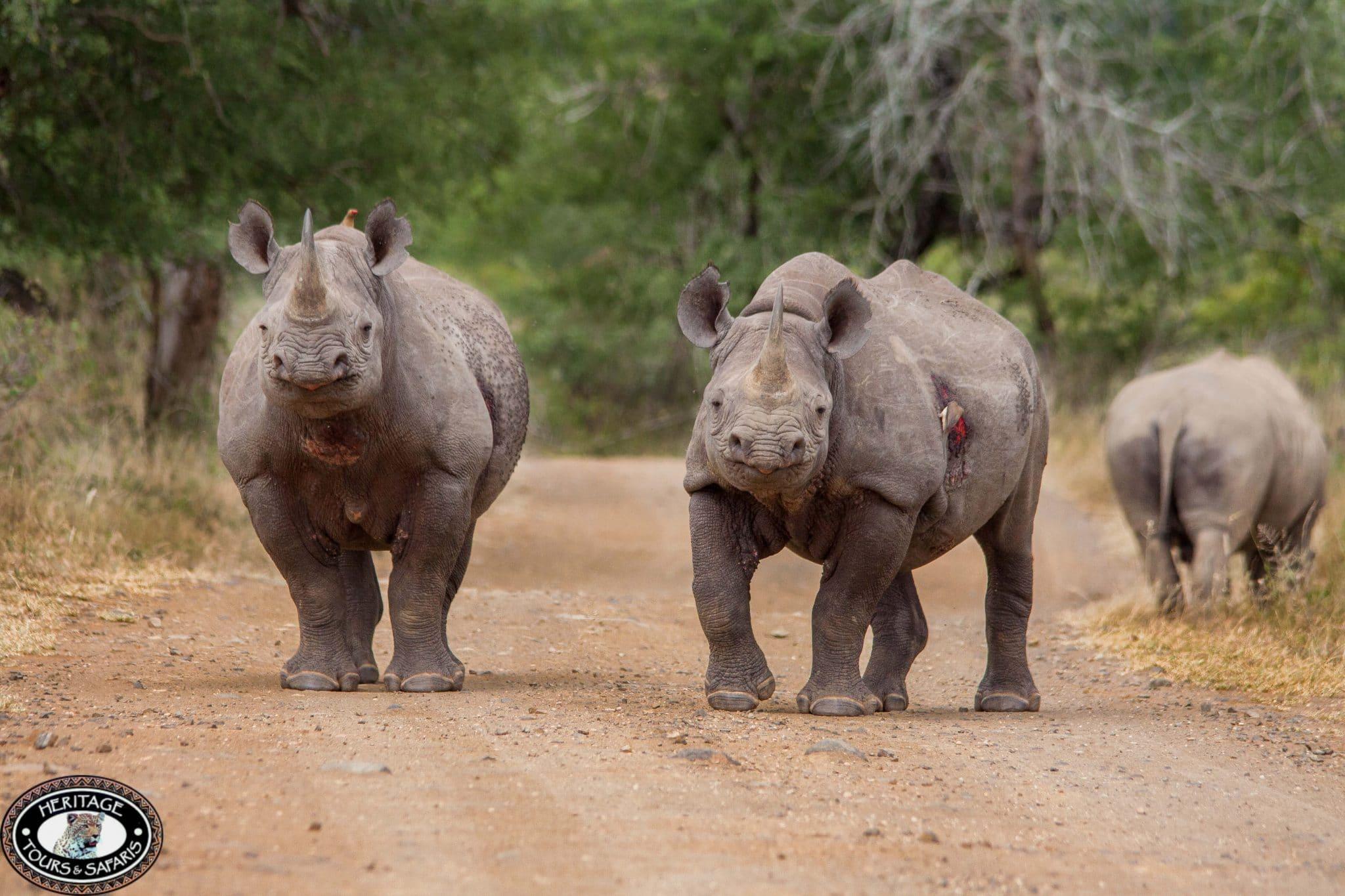 KwaZulu Natal South Africa Tours & Safaris