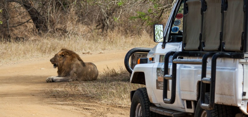 Zululand South Africa Safari