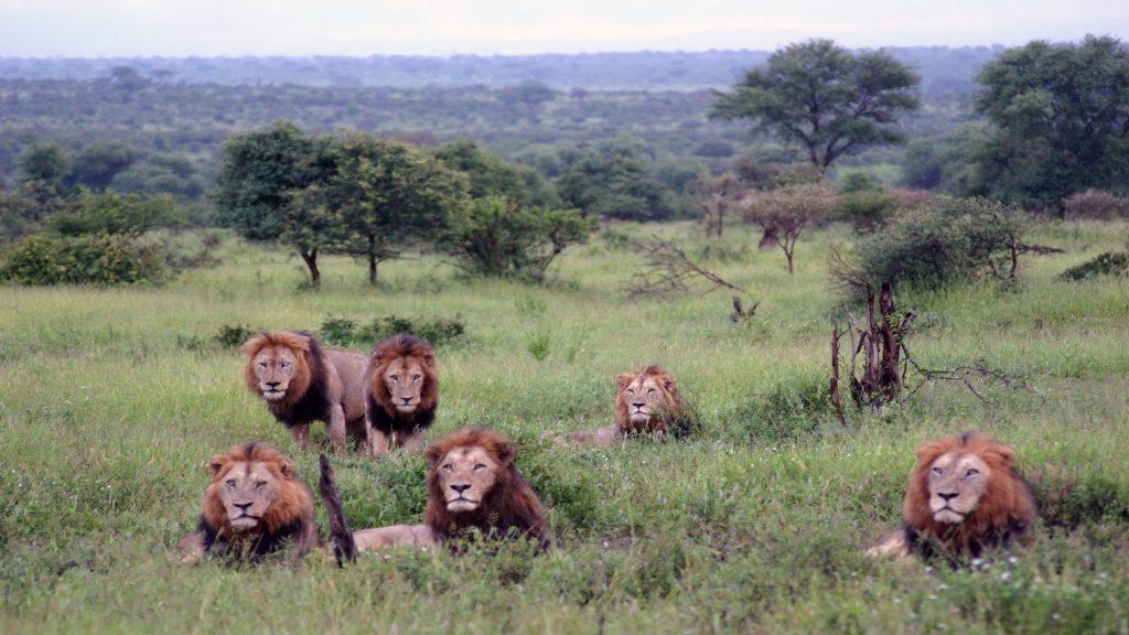 game reserves in south africa kruger national park