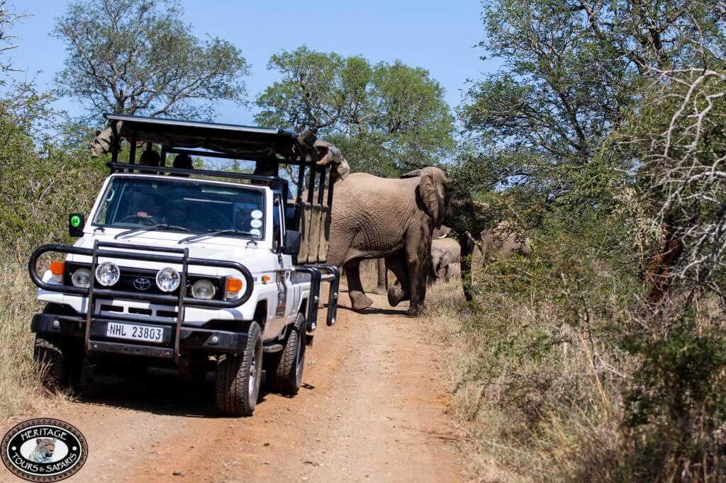 safaris safari near durban