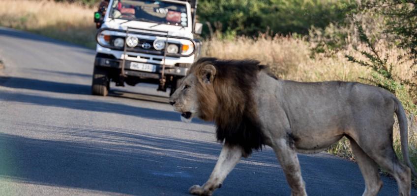 Safari near Durban