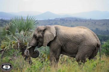 KwaZulu Natal Safari to Hluhluwe