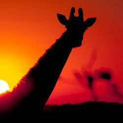 3 night south africa safari package