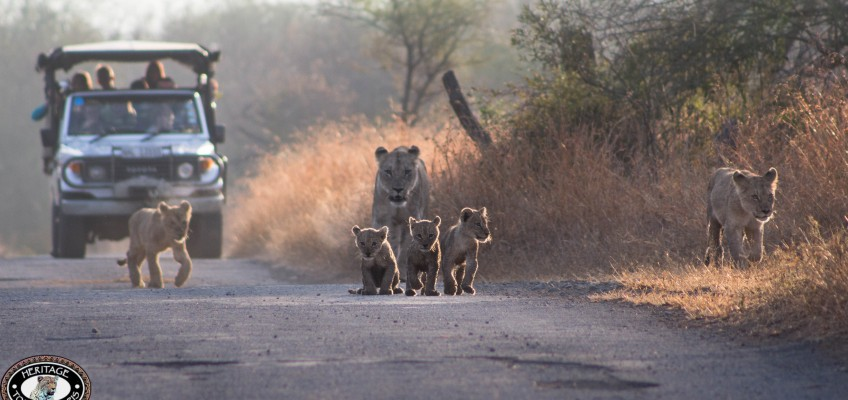 Durban Safari Updates