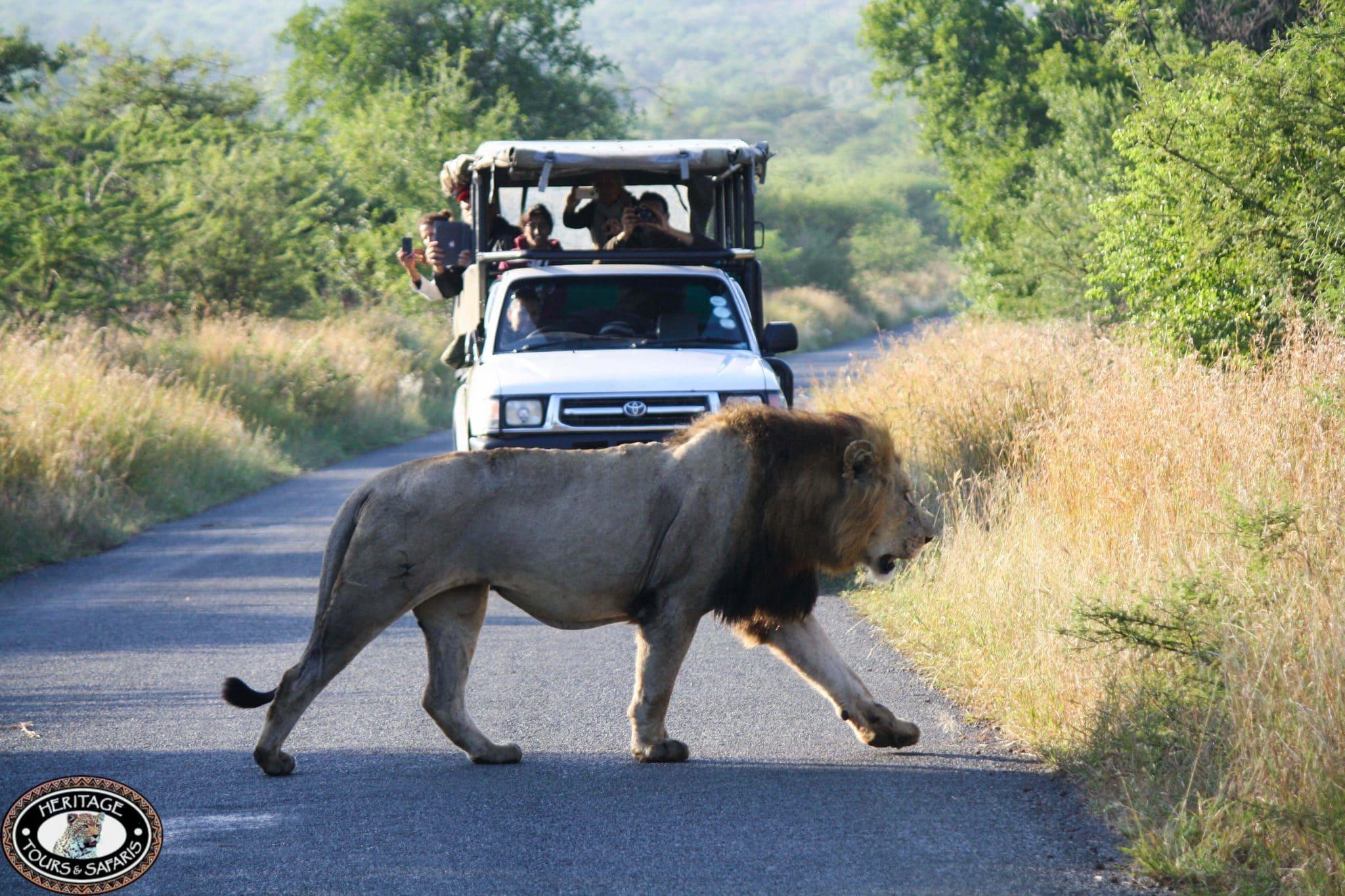 Hluhluwe South Africa