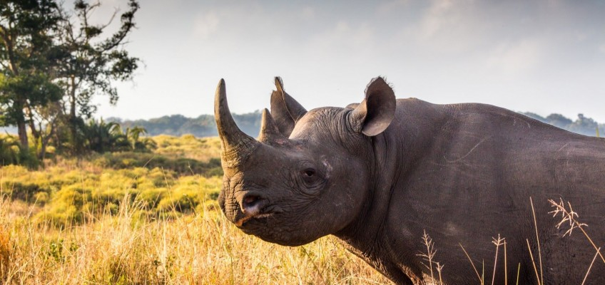 3 Day Safari Package to South Africa