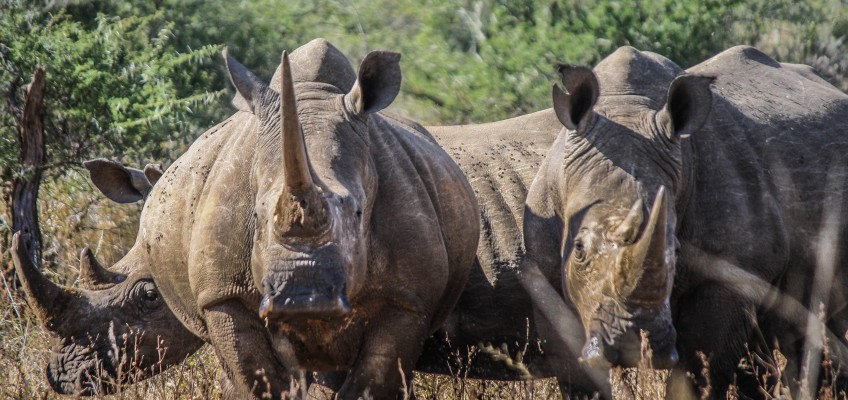 4 Day Cape Town Zululand Safari Package