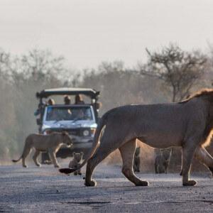 3 Day Durban Safari
