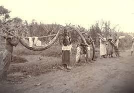 ivory hunting 1