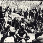 ivory hunting