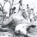 Relocating rhinos hluhluwe