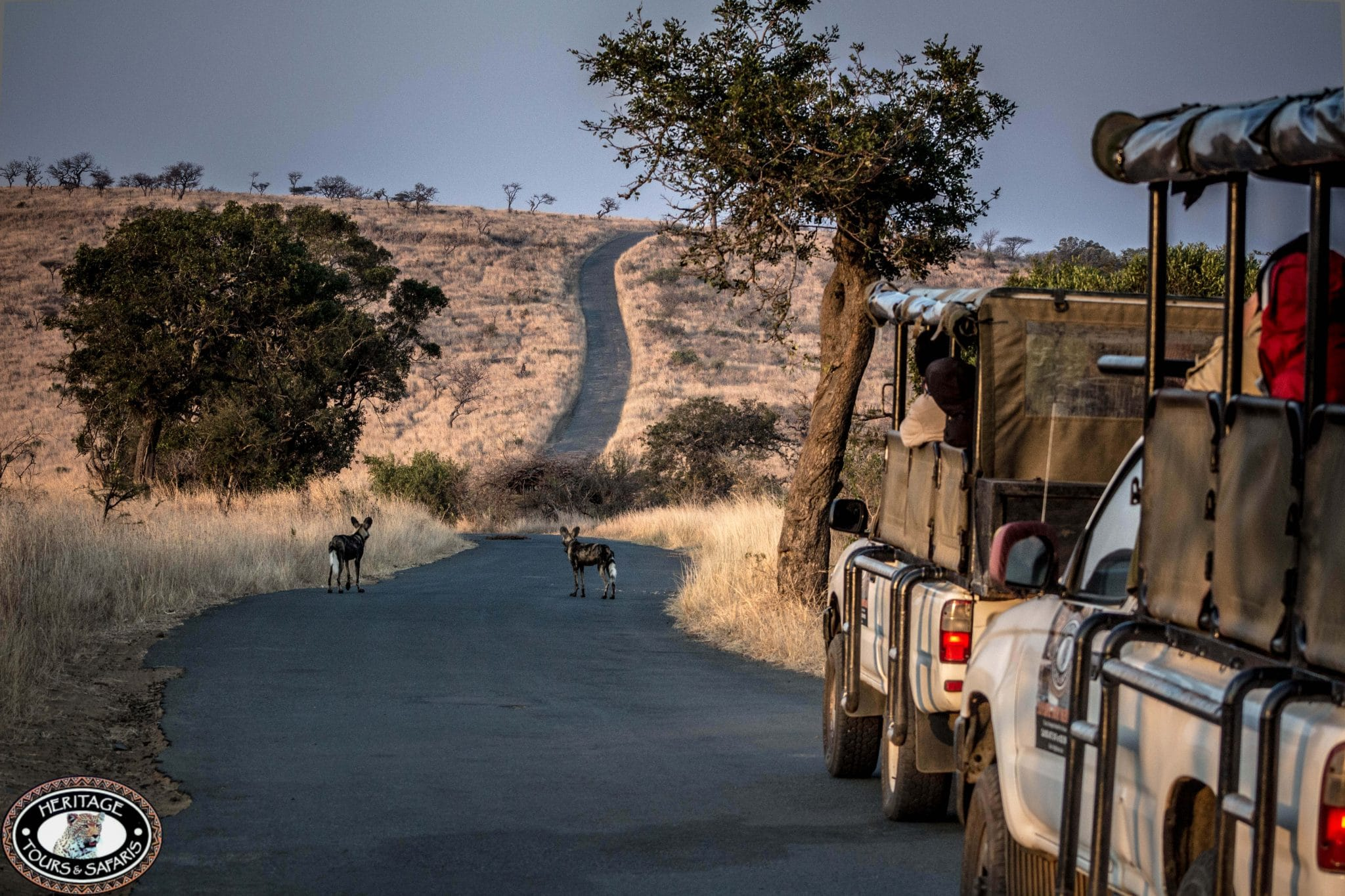 9 Day Cape Town Zululand Safari Package
