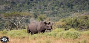 kzn poacher killed in kzn