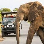 elephant in kwazulu natal hluhluwe game reserve