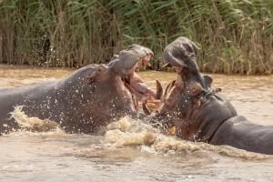Hluhluwe Imfolozi Game Reserve