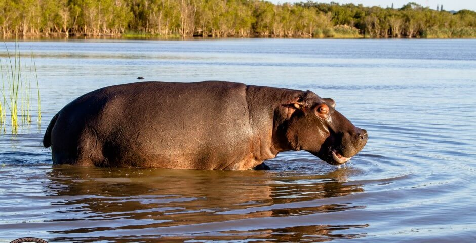 hippo cape vidal