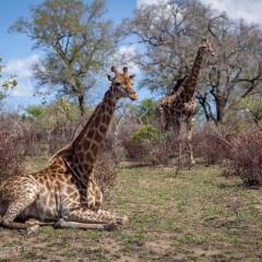 Safari Near Cape Town